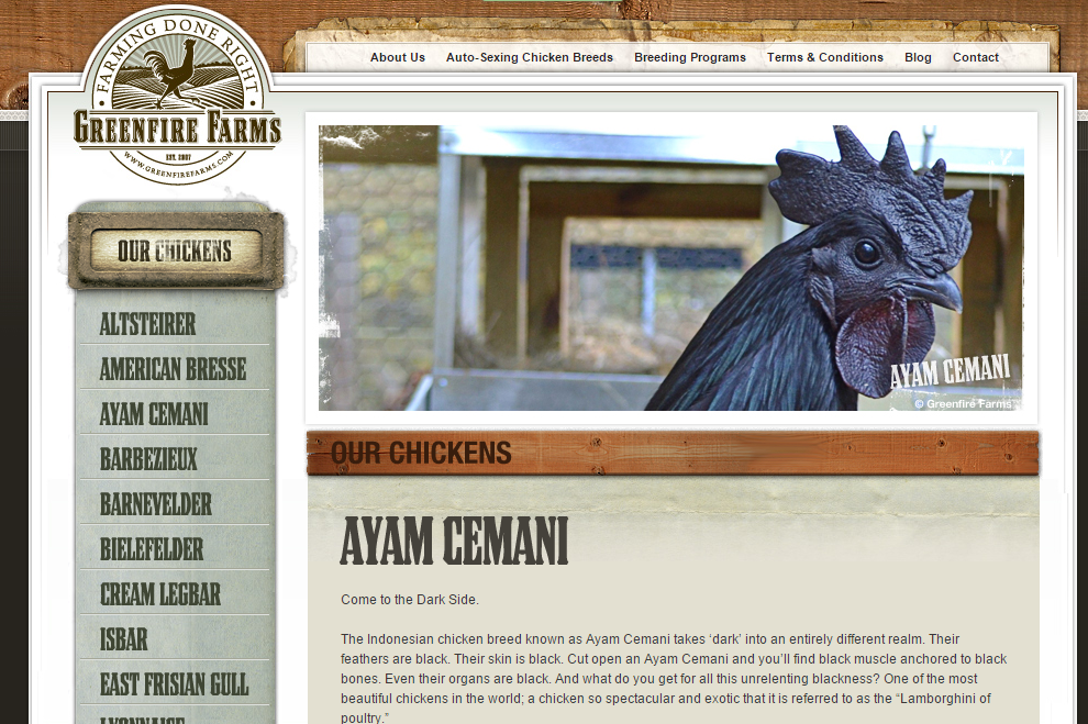 Greenfire Farms (Ayam Cemani)