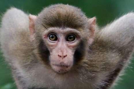 Gila, Pasangan Miliuner Ini Wariskan Hartanya ke Monyet